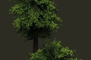 LowPolygon Tree 1