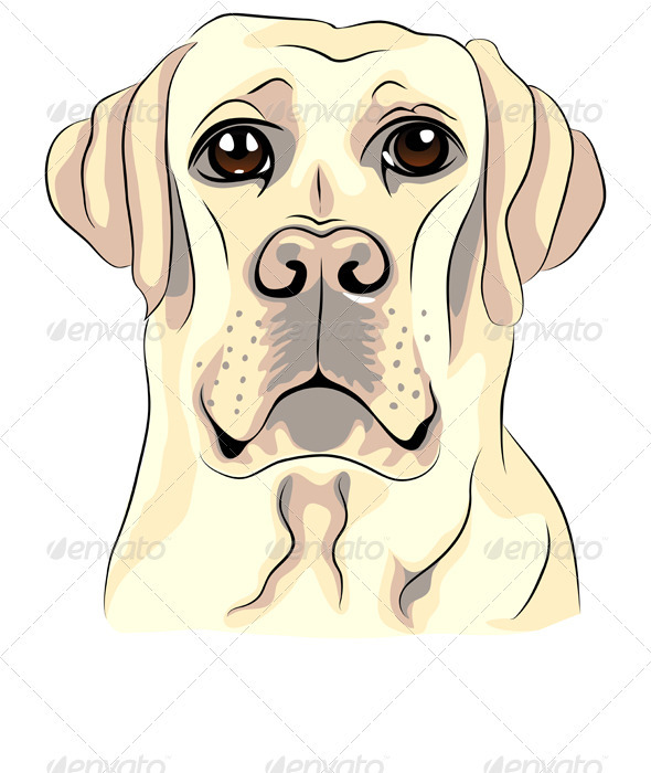 Graphic River Vector Color Sketch Dog Breed Labrador Retrievers Vectors -  Characters  Animals 946679