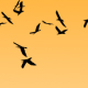 HD FLOCK OF BIRDS FLYING - VideoHive Item for Sale