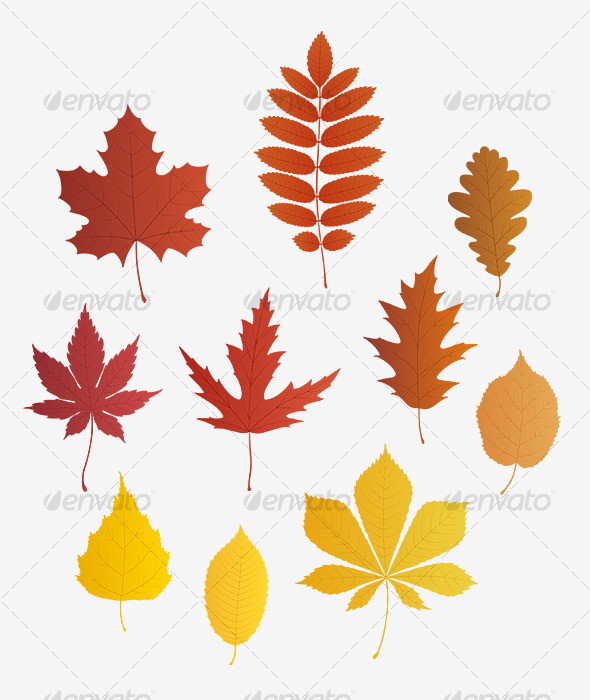 GraphicRiver Autumn leaves vector 127795