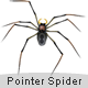 Pointer Spider - ActiveDen Item for Sale