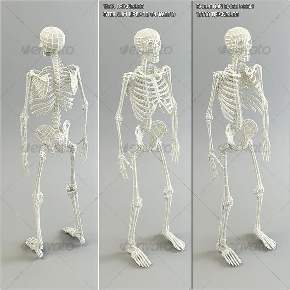 3DOcean Low Poly Base Mesh Skeleton 122476