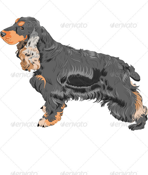 Graphic River Vector Dog Black English Cocker Spaniel Breed Vectors -  Characters  Animals 1048420