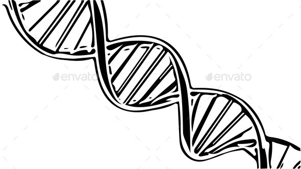 human dna string sketch illustration Stock Photo by ...