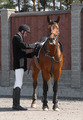 Equestrian Sport - PhotoDune Item for Sale