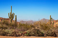 Gravel path through Tonto National Forest - PhotoDune Item for Sale