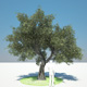 Olive Tree - 3DOcean Item for Sale