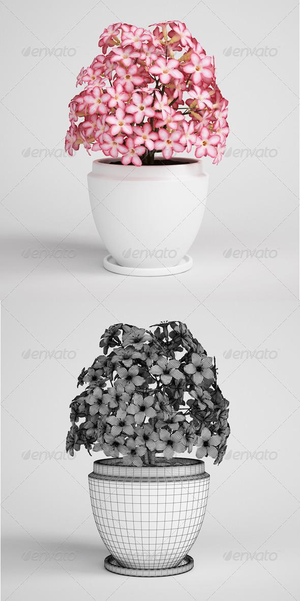 3DOcean CGAxis Flowering Plant in Pot 04 3D Models -  Plants 164985