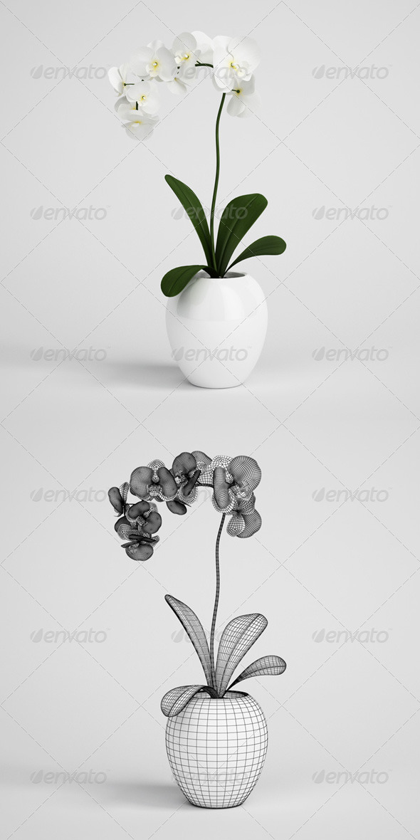 3DOcean CGAxis Orchid Plant in Pot 10 168196