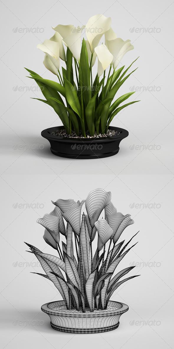 3DOcean CGAxis Calla Lilies in Planter Pot 22 168222