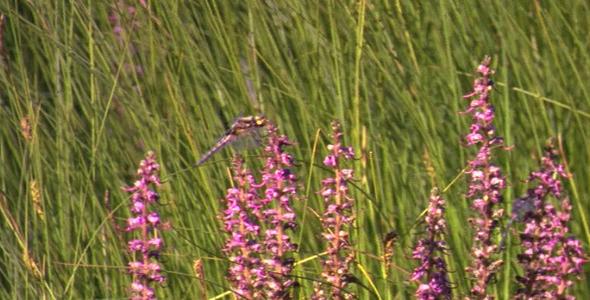 Purple Flowers 399 Pixels Wide By 150 Pixels Tall