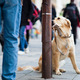 lonely cute dog waiting patiently for his master on a city stree - PhotoDune Item for Sale