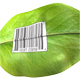 Barcode on leaf - GraphicRiver Item for Sale