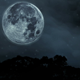Realistic Moon Timelapse Over Trees & Water - VideoHive Item for Sale