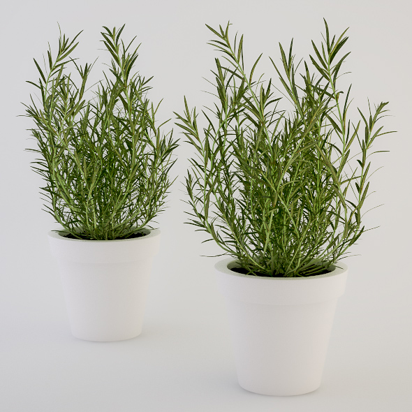 3DOcean Rosemary in a Pot 235776