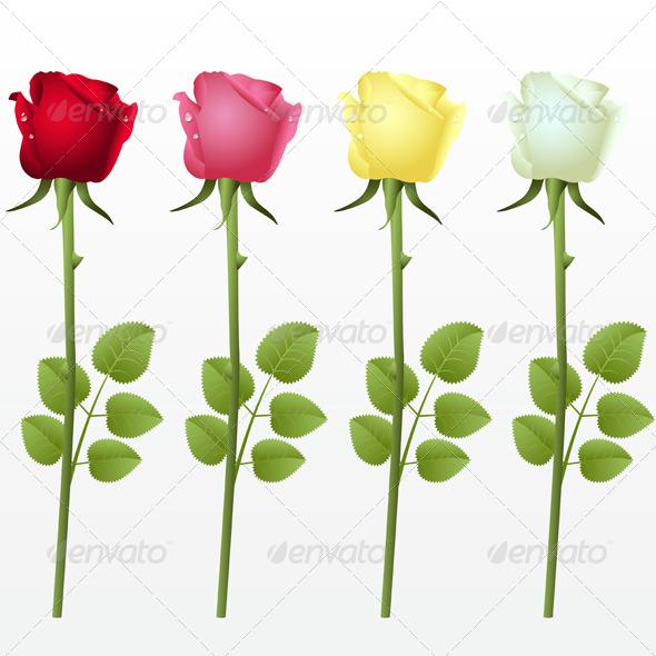 Graphic River Roses Vectors -  Conceptual  Nature  Flowers & Plants 237031