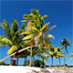 Palm Trees - VideoHive Item for Sale