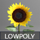 Low poly Sunflower - 3DOcean Item for Sale