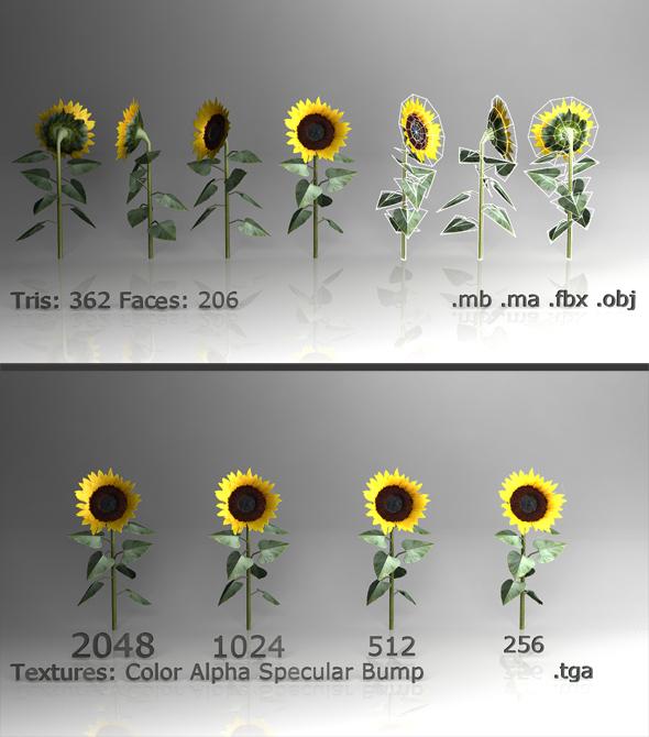 3DOcean Low poly Sunflower 3D Models -  Plants  Flowers 84871