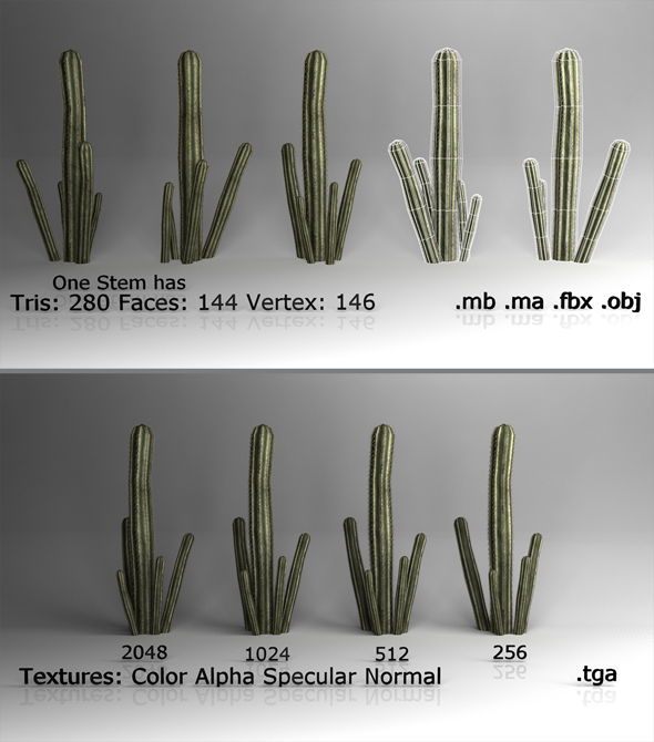 3DOcean Low poly Cactus 3D Models -  Plants  Other 85279