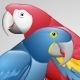 Parrot Vector - GraphicRiver Item for Sale