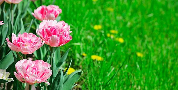 399 Pixels Wide Pink Flower Images For Facebook Timeline