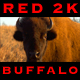 Buffalo Eating - VideoHive Item for Sale