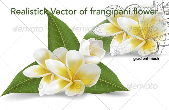 GraphicRiver frangipani vector flowers 94565