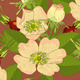 Seamless Background Wild Rose Rose-hip - GraphicRiver Item for Sale
