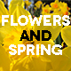 Daffodils In The Spring - VideoHive Item for Sale