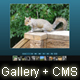 Advanced Gallery with CMS - ActiveDen Item for Sale