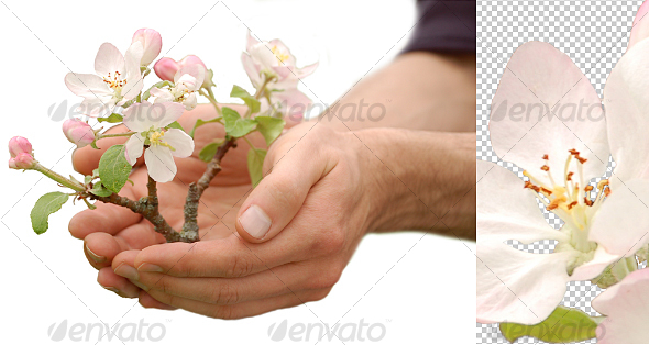 GraphicRiver Tree in Palm of Hand 104146