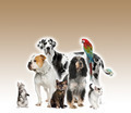 Group of pets standing in front of white and brown background, studio shot - PhotoDune Item for Sale