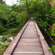 Wooden rope walkway through in a rainforest - PhotoDune Item for Sale