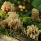 Coral Mushrooms On A Tree - VideoHive Item for Sale