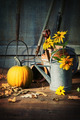 Garden shed with tools, pumpkin and flowers - PhotoDune Item for Sale