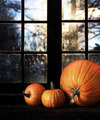 Different sized pumpkins in window - PhotoDune Item for Sale