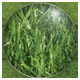 Green Grass Background - GraphicRiver Item for Sale