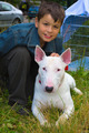 Boy and white Bull Terrier Dog breed - PhotoDune Item for Sale
