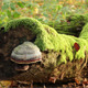 Mushroom On A Mossy Tree - VideoHive Item for Sale