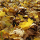 Autumn Leaves - VideoHive Item for Sale