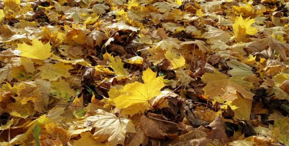 Autumn Leaves Pictures 399 Pixels Wide » AiHouQi.com