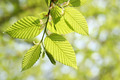 Green Foliage in Springtime - PhotoDune Item for Sale