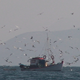 Fishing Boat with Seagulls - VideoHive Item for Sale