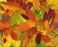 Autumn leaves background - PhotoDune Item for Sale