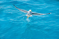 bird seagull on sea water in ocean - PhotoDune Item for Sale