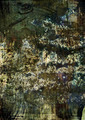 Photo overlays grunge texture 5 - PhotoDune Item for Sale