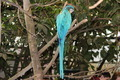 Adult Macaw - PhotoDune Item for Sale