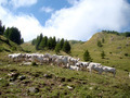Pasture on Col de Tende 7 - PhotoDune Item for Sale