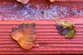 Autumn Leaves On Wood Board - PhotoDune Item for Sale